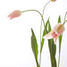 0903 flowers #2