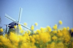 (gracias!) Tags: blue film windmill yellow pentax 100 rapeseed mz5  centuria  my