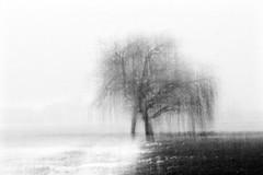 hug 4 (nicola tramarin) Tags: bw fog hug italia nebbia abbraccio blackwhitephotos
