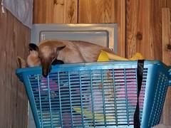 Good nap spot