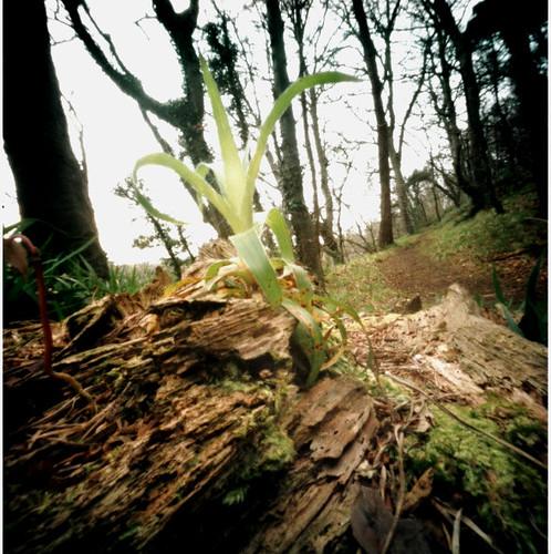 Plant on log pinhole image