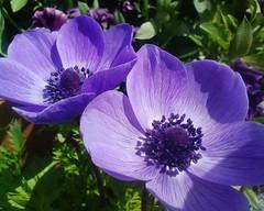【アドエスphoto】青とか紫は苦手み$?$$