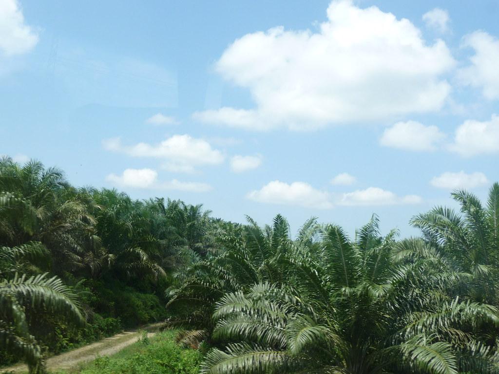 Palm Oil (3)