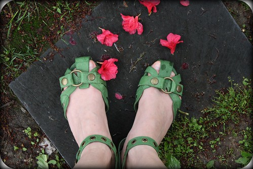fallen petals by you.