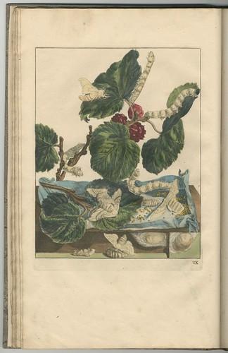 Naauwkeurige waarneemingen, 1740 f