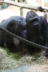 Louisville Zoo 131 (cellophane303) Tags: louisvillezoo