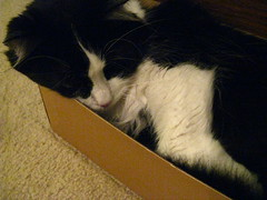 Josie in the shoebox