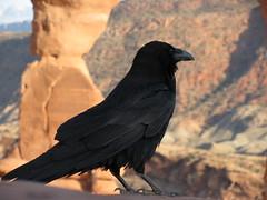 Raven at Delicate Arch (moultonian) Tags: sunset favorite southwest utah arches moab crow archesnationalpark raven fourcorners delicatearch americansouthwest