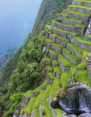 Peru - Machu Picchu, steiler geht's kaum ,  18 v (roba66) Tags: mountains peru inka berge machupicchu soe jol ruinen inkas huaynapicchu mauern antik terassen sdamerika ruinenstadt perumachupicchu colorphotoaward stadtindenwolken 100commentgroup atomicaward flickrunitedaward 100pluscommentsgroup