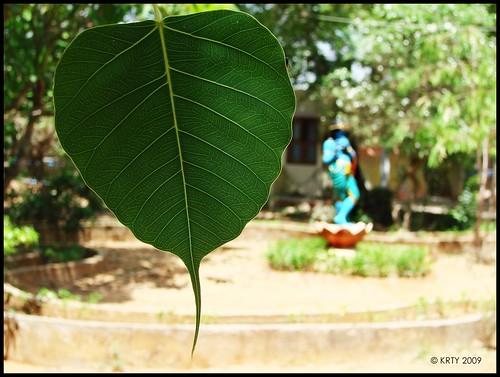 ஆலிலை க்ருஷ்ணர்