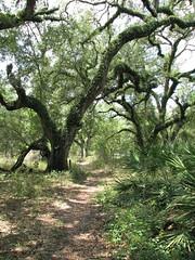 Fla Trail