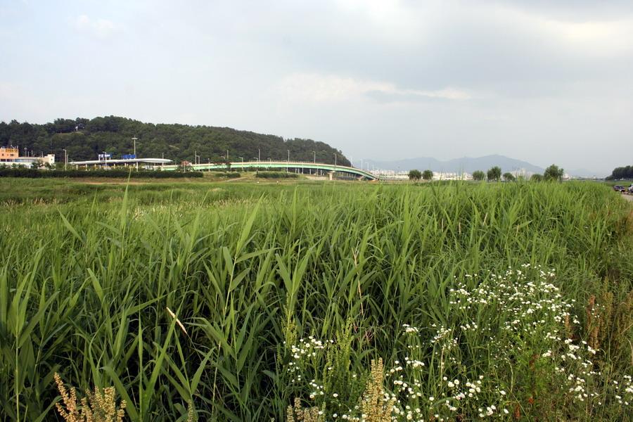 Yudeungcheon(1)