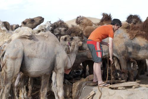 Gobi Desert 51