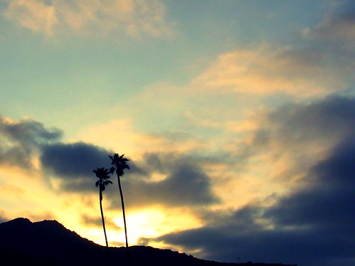 palm trees on catalina island