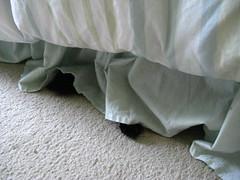 """Huggy Bear """"hiding"""""""