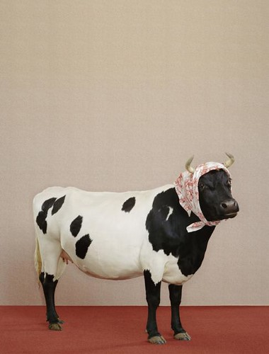 Cow_Headscarf