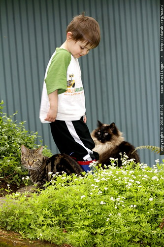 sequoia and his cats - _MG_0117.embed