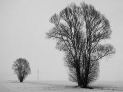 Together alone (RainerSchuetz) Tags: trees winter snow tree silhouette landscape visualart potofgold schattenriss silhouetten theunforgettablepictures baumsilhouetten