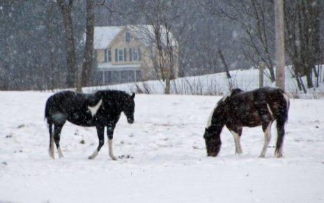 horses on a snowy farm