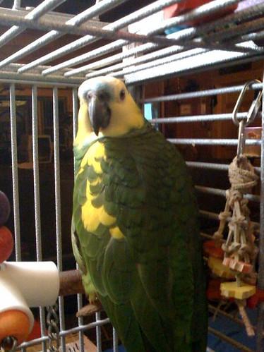 Parakeet with diarrhea and plucking feathers around anus