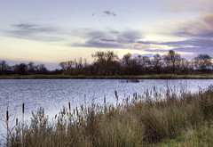 England, Bedfordshire: Evening Light (Tim Blessed) Tags: uk trees sky nature clouds reeds landscapes countryside scenery lakes wetlands ponds abigfave singlerawtonemapped