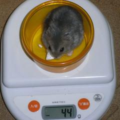コー太は体重増加です。