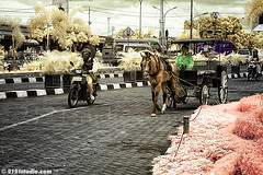 """Dokar"" @ Yogyakarta (Infrared) (2121studio) Tags: travel horse art nature indonesia ir artwork nikon d70 ali malaysia infrared yogyakarta jogjakarta indah dokar borobudur kuantan melayu kembara seni alam karya bestphoto nikonian centraljava malaysianphotographer jawatengah drali topphotographer keretakuda topimage empatmata convertedinfraredcamera 2121studio karyaseni kuantanphotographer pahangphotographer ciptaanallahswt malaysianinfraredphotographer jogjamagelangdiengplateau mastukul 0139342121 alikuantan worldbestphoto indonesiantopmodelniaramadhaniachaseptriasaagnesmonicawulanjamilahrossawsrendramellygoeslowindonesiancelebritiesgossiphotpanas"