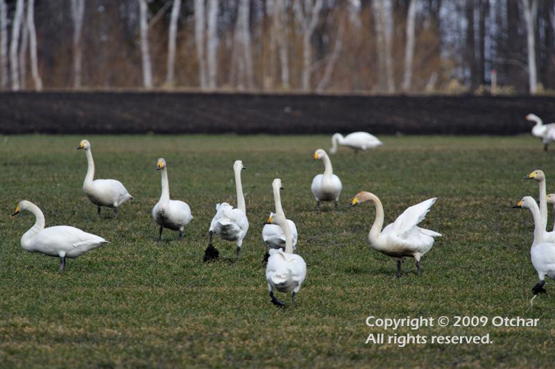 Swan Farm