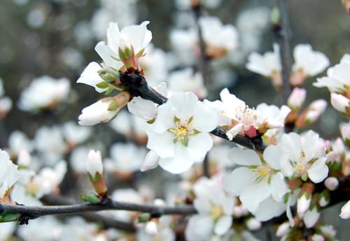 Spring Awakening 04