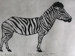 Burchell's variety of Zebra