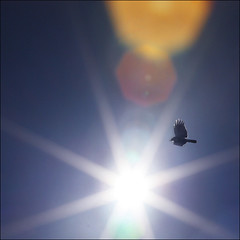 Crow-sing the Sun (NaPix -- (Time out)) Tags: blue sky sun 6x6 square freedom exploring flight explore luck sing rays crow oooops 500x500 canonef70200mmf4lisusm freedomofflight napix canoneosdigitalrebelxsi notabokeh crowsingthesun