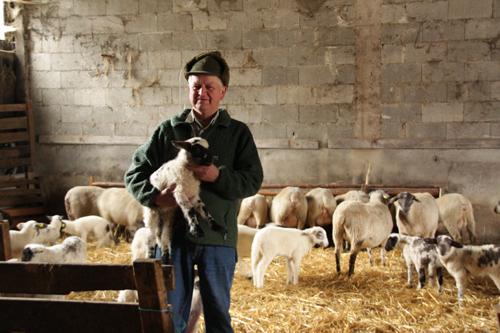 sauerland boer met lam
