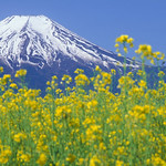 Mt.Fuji with spring