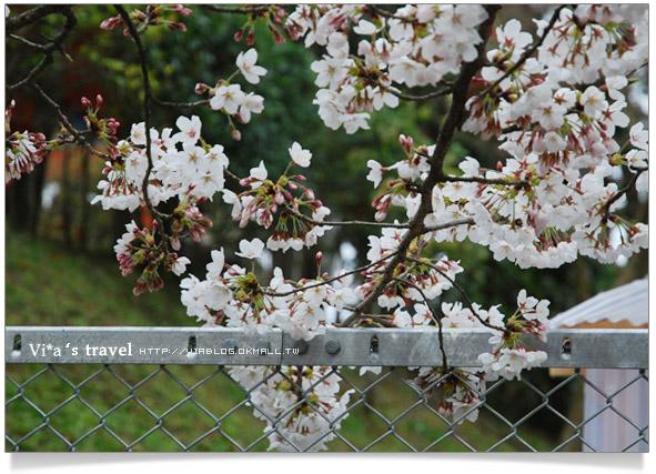 【京都春櫻旅】京都旅遊景點必訪~京都清水寺之美京都清水寺20