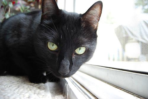 8 - Cat Peer
