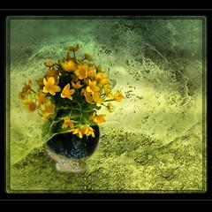 The blue vase (E Dina PhotoArt) Tags: art yellow legacy flowerz theworldwelivein sailthesevenseas justimagine memoriesbook awardtree artistictreasurechest miasbest flickrvault magicunicornverybest selectbestfavorites trolledproud sbfmasterpiece