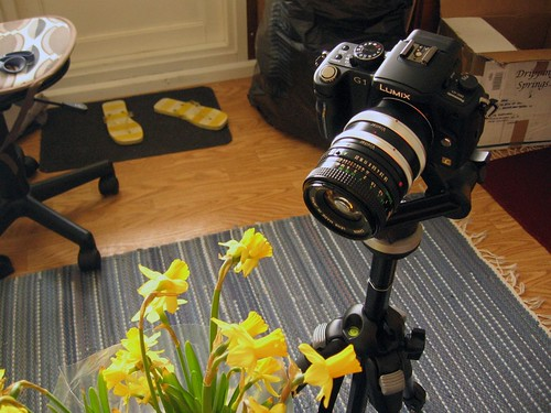 G1 taking Macro of mini daffodils