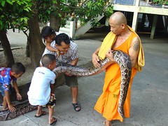 Monk and snake (Puykamo@Tai) Tags: people pet texture animal asian thailand kid interesting hand skin snake touch thai p