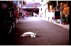 (yugoroyd) Tags: street cats film bicycle 35mm canon iso100 tokyo kitten shoot fuji f1 retro   realaace asakusa  nega   straycat