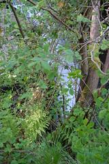 Lynn falls (gordonjc) Tags: scotland falls lynn dalry ayrshire lynnglen northayrshire garnockvalley