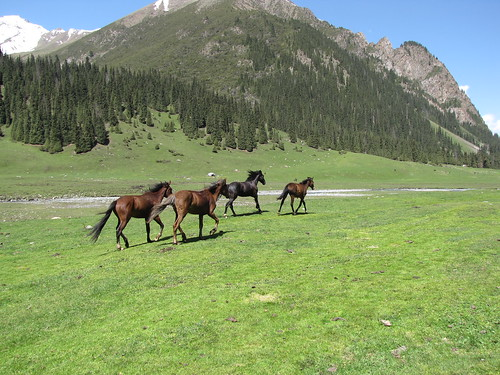 Horses in the Altyn Arashan Valley