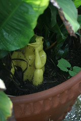 froggy_0722