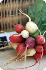 radishes from Bardstown Road farmer's market