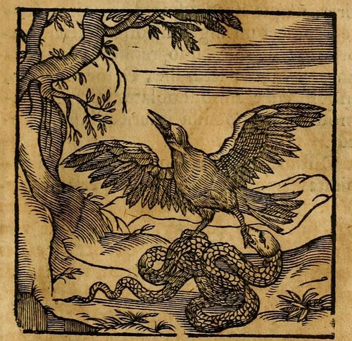 Corvus et Serpens