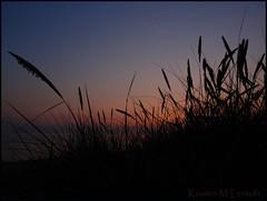 End of the day (Kirsten M Lentoft) Tags: sunset beach grass denmark weed silhouettes chapeau storebælt greatbelt bej mywinners aplusphoto photographydigitalart bjergenordstrand thesuperbmasterpiece kirstenmlentoft