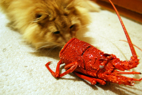 romeo and the crayfish