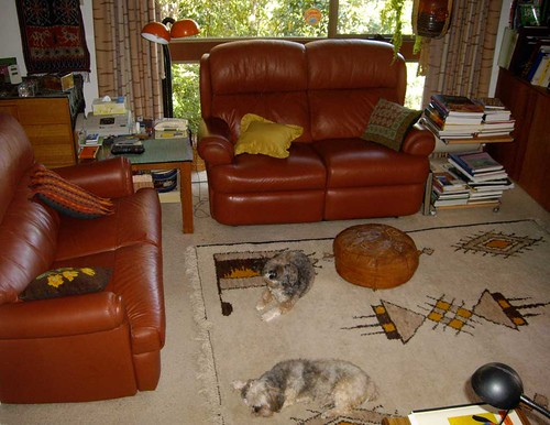 My dogs in lounge room