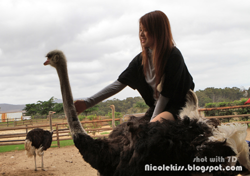 cooing ostrich neck
