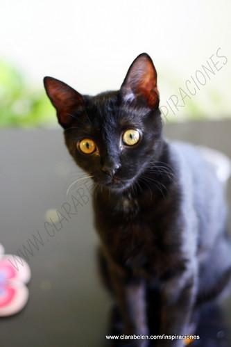 nuestra guapa gatita :)