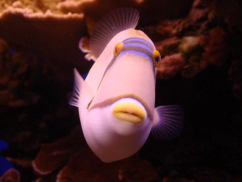 דגים במצפה התת ימי באילת. תמונה: אשה קרול.